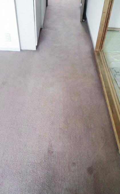 carpet-hokourosen01.jpg