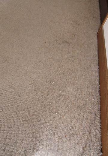 carpetcleaning-rouka-zoom0.jpg