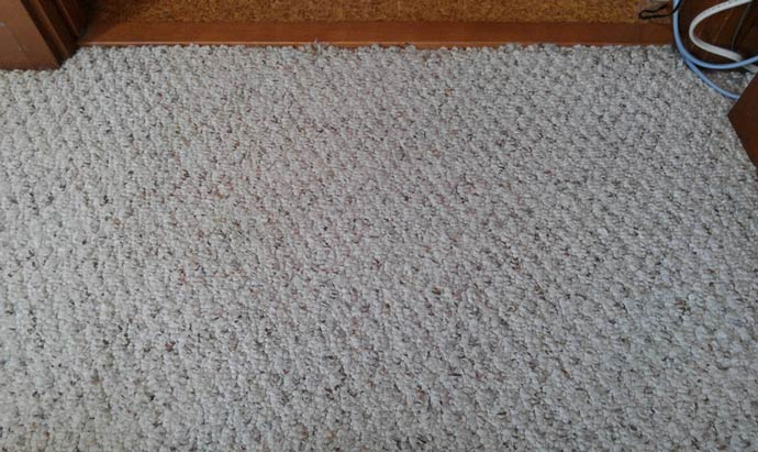 carpet-inunoosikko_1.jpg