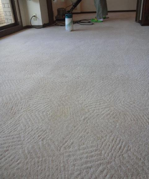 wool100%carpetcleaning1.jpg